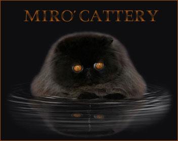 Mirò Cattery